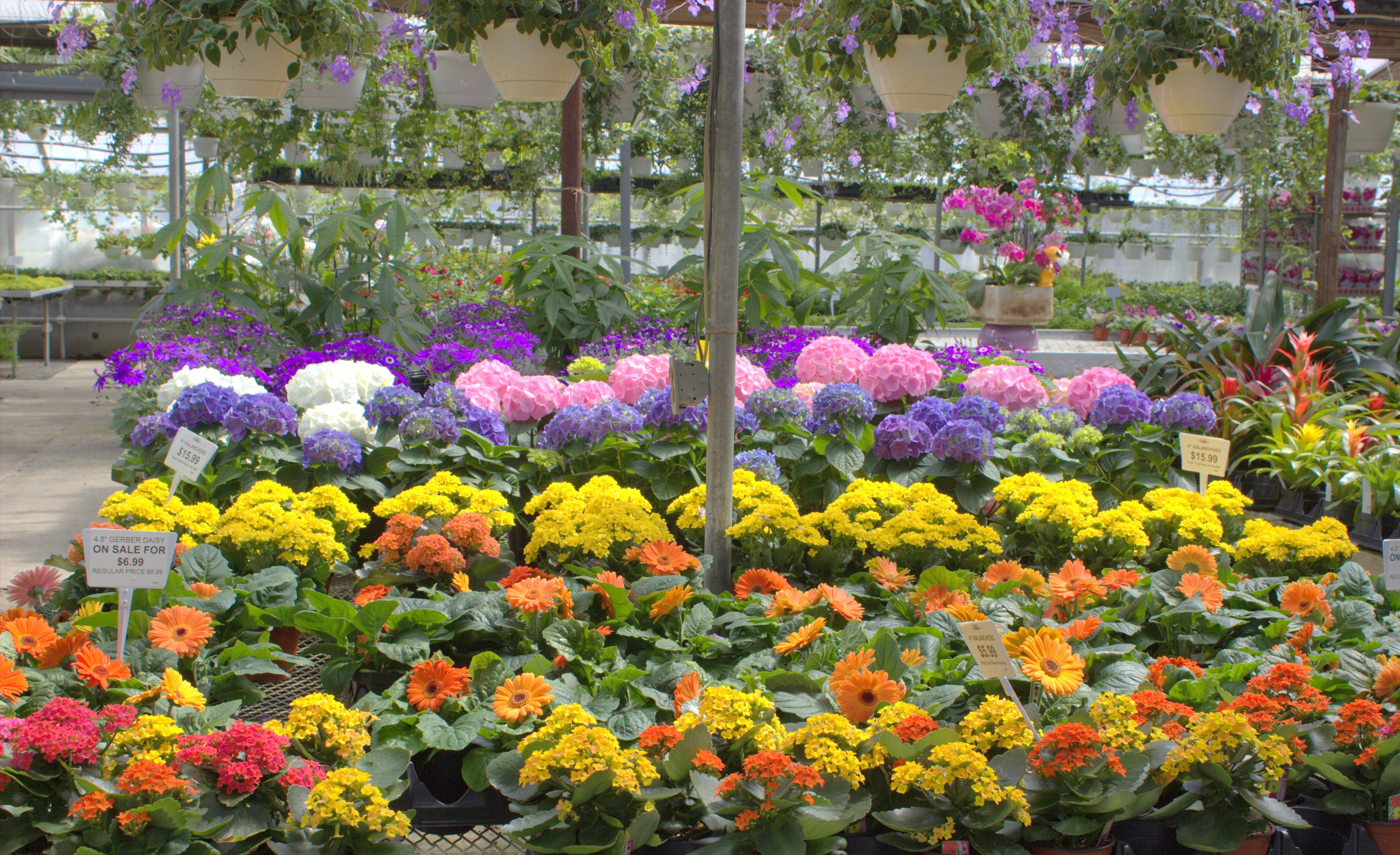Flowering House Plants Claussens Florist Greenhouse And
