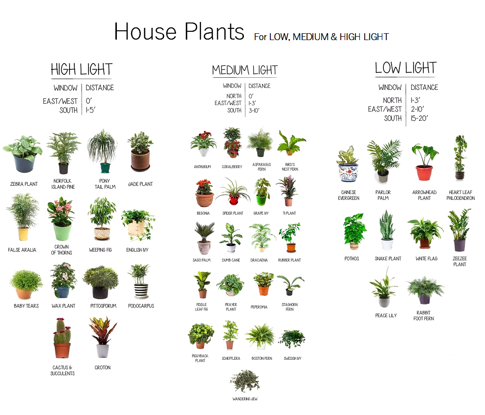 indoor plants that like direct sunlight our house plants are categorized for sun exposure sun plants need or more hours of direct day part sunpart shade to indoor houseplants claussens florist greenhouse and perennial farm